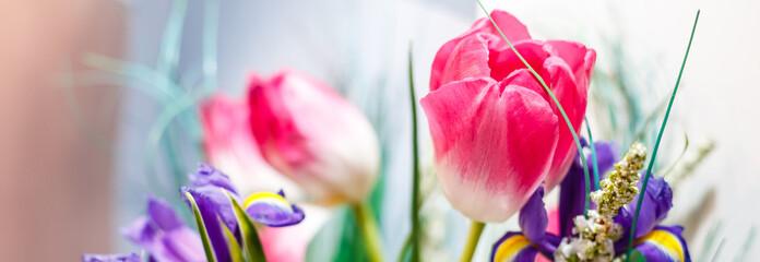 Blue irises and pik tulips