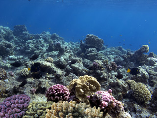 Fototapete - The Best Coral Reef Locations: Red Sea are the largest natural structures