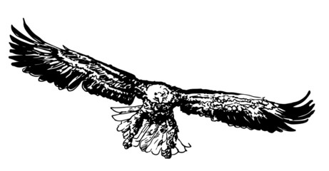 Sketch of a flying eagle handmade in isolate on a white background .Vector illustration.