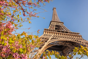 Fototapete - Eiffel Tower during spring time in Paris, France