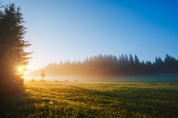 Fotomurales - Fantastic misty pasture in the sunlight. Locations place Durmitor National park, Montenegro.
