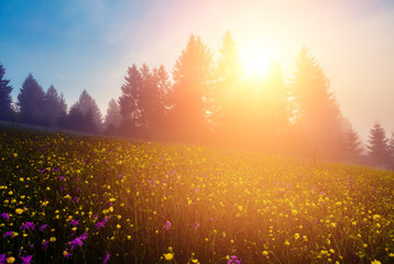 壁紙(ウォールミューラル) - Vivid green hills in warm sunlight at twilight.