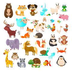 Sea animals, wild animals, woodland animals.