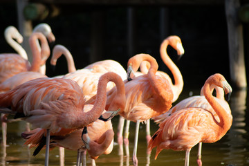 Papiers peints Flamingo flamant rose