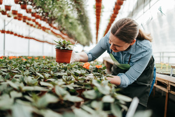 Happy and positive young adult woman working in greenhouse and enjoying in beautiful flowers.