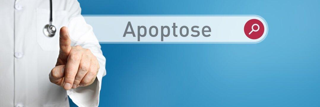 Apoptose. Arzt im Kittel zeigt mit dem Finger auf ein Suchfeld. Das Wort Apoptose steht im Fokus. Symbol für Krankheit, Gesundheit, Medizin