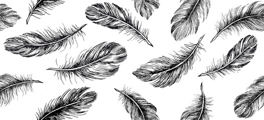 Hand drawn feather on white background. Fotomurales