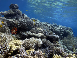Wall Mural - Wonderful and beautiful underwater world with corals.