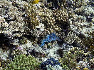 Fototapete - Wonderful and beautiful underwater world with corals.