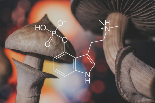 chemical formula of psilocybin on a blackboard Mushroom. Psilocybin mushroom. Close up Magic shroom. Psychedelic drug. Dry Psilocybe cubensis. Albino A strain.