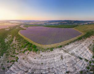 Wall Mural - Aerial meadow dig panorama of lavender