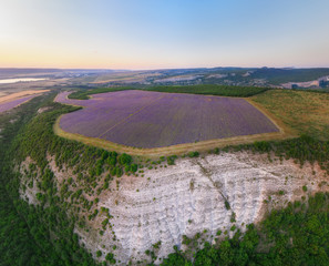 Wall Mural - Aerial meadow dig panorama of lavender on sunset