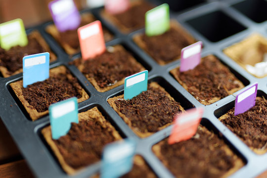 Starter tray full of biodegradable seedling pots with colorful tags attached to mark different plants