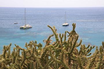 Papier Peint - cactus costa mediterraneo almería cala san pedro 4M0A7356-as20