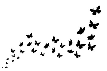 Vector silhouette of butterflies on white background. Symbol of nature and insect. Fototapete