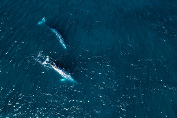 grey whale in Mexico Baja California aerial drone view panorama Papier Peint