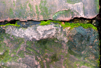 Wall Mural - Freshness green moss growing on the moist stone in the rain forest