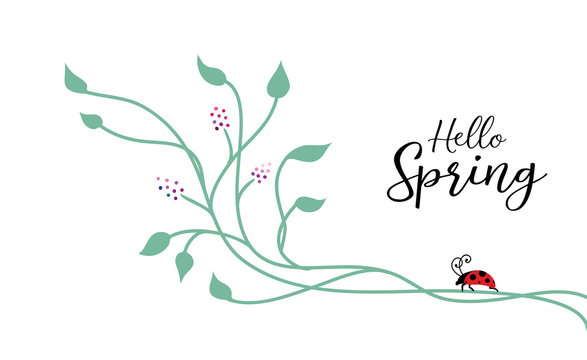 Spring background design with nature design elements of climbing ivy vines or floral design with cute lady bug on corner border, typography saying Hello Spring by ladybug