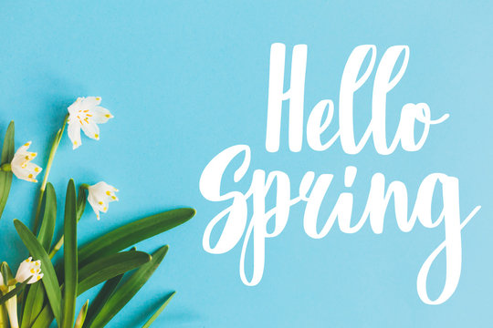 Hello Spring text with first spring flowers on blue background, flat lay. Stylish floral greeting card or poster template. Springtime. Floral  border of Spring snowflake