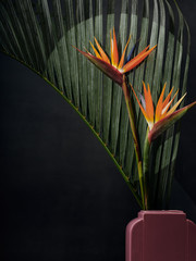 Birds of Paradise in Pink Against Palm in Art Deco Vase with Spotlight on Blooms