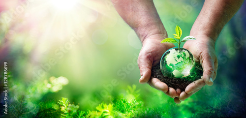 Wall mural Earth Day - Growing Plant On Globe In The Green Forest - Environment Concept