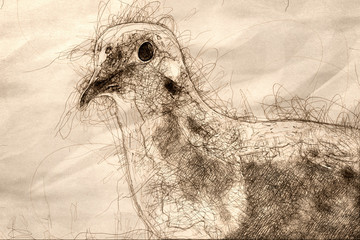 Wall Mural - Sketch of a Profile of a Perched Mourning Dove