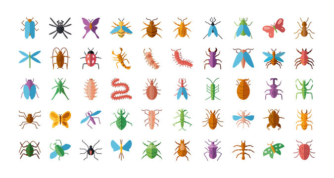 bugs and insect icon set, flat style