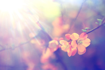 Foto auf Leinwand Blumen tender spring flowers background / beautiful picture of flowering branches