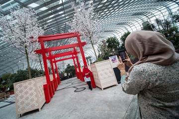 A visitor poses for a photograph under cherry blossoms and faux tori gates during the Sakura Matsuri floral display at the Flower Dome of Gardens by the Bay, as tourism takes a decline following the coronavirus outbreak in Singapore