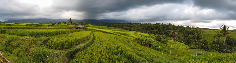 Foto auf Leinwand Dunkelgrau Beautiful rice field of Jatiluwih, Unesco heritage in Indonesia
