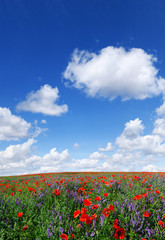 Wall Mural - Idyllic view, meadow with red poppies blue sky in the background