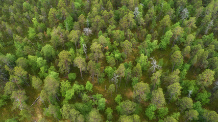 Aerial view of green forest captured from above. Lapland.