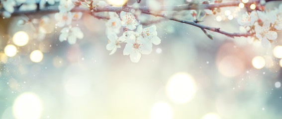 Wall Mural - Spring Nature Easter art background with blossom. Beautiful nature scene with blooming flowers tree and sun flare. Sunny day. Spring flowers. Beautiful Orchard. Abstract blurred background. Springtime