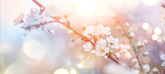 Klistermärke - Spring Nature Easter art background with blossom. Beautiful nature scene with blooming flowers tree and sun flare. Sunny day. Spring flowers. Beautiful Orchard. Abstract blurred background. Springtime