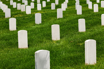 Fototapete - White tomb stones on green grass of the cemetery burial ground