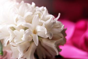 Fotobehang White hyacinth or Dutch hyacinth so close