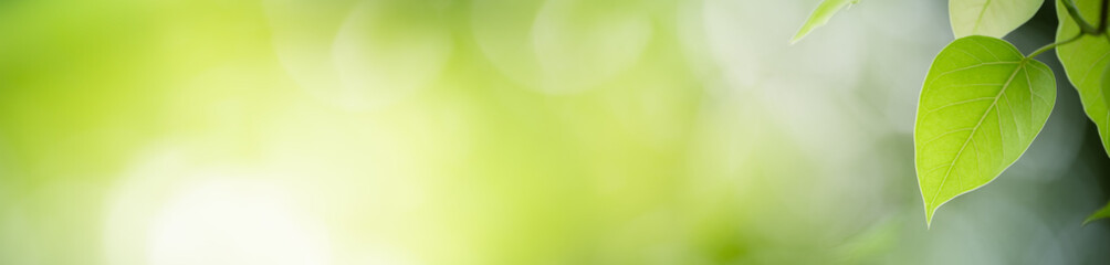Keuken foto achterwand Natuur Beautiful nature view of green leaf on blurred greenery background in garden with copy space for text using as summer background natural green plants landscape, ecology, fresh cover page concept.