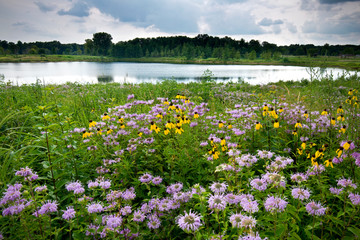 Storm clouds move along the horizon over summer wildflowers and a small pond. Fotobehang