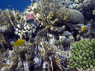 Wall Mural - Photo of coral garden with fishes. Red Sea.