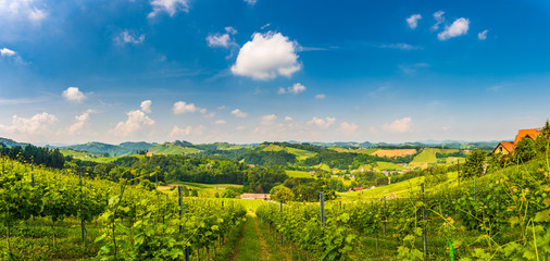 Austria Vineyards panorama Sulztal Leibnitz area famous destination wine street area south Styria , wine country in summer. Tourist destination. Green hills and crops of grapes. Tourist spot.