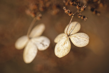 Вried flowers on brown background