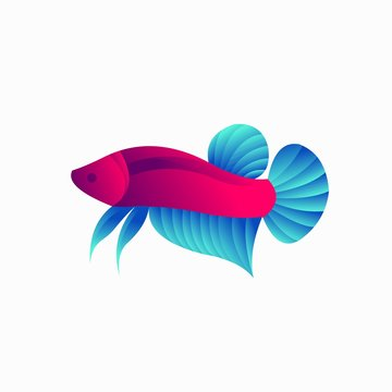 Betta fish with a simple concept