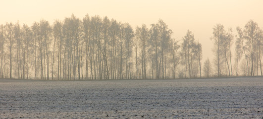 Trees in the snow and fog at dawn