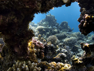 Wall Mural - The Best Coral Reef Locations: Red Sea are the largest natural structures in the world