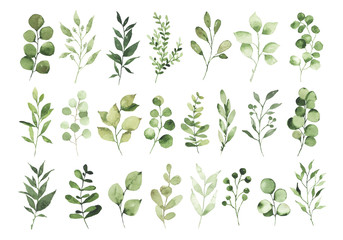 Fototapeta Collection of watercolor greenery branch leaves twigs floral plant forest herbs isolated on white background. Botanical spring summer leaf illustration for wedding invitation card, frame and wreath obraz
