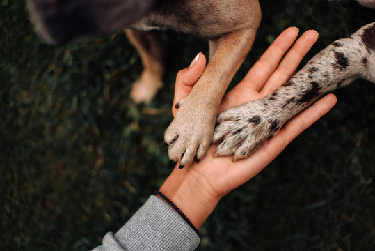 top view of two dog paws in owner hand