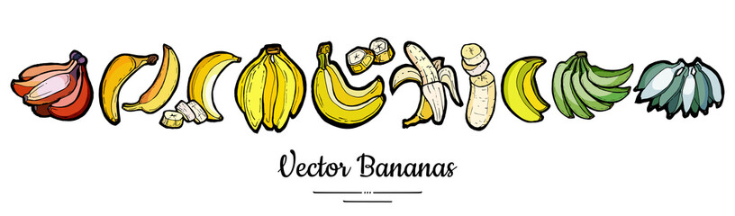 Bananas set vector isolated. Whole chopped banana slices bunch. Yellow green red fruits long banner hand drawn. Food vegetarian logo icons sketch ink style. Fruit bananas illustration white background