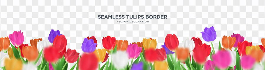 Colorful tulips flower on transparent background seamless border vector decoration, 3d floral frame template illustration Fototapete