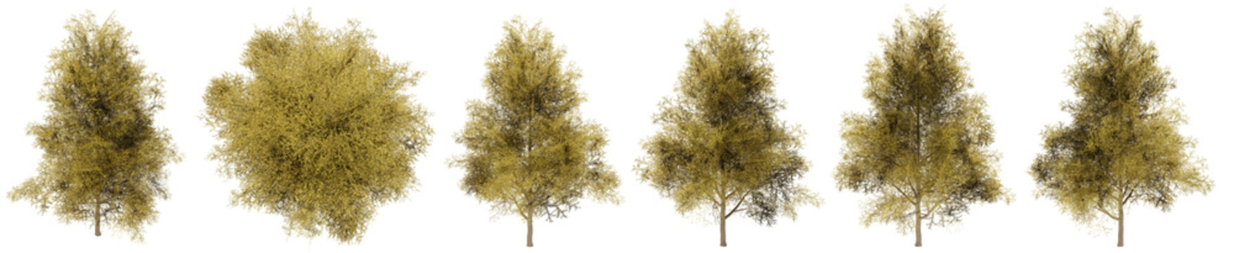 Set or collection of green ginkgo trees isolated on white background. Concept or conceptual 3d illustration for nature, ecology and conservation, strength and endurance, force and life