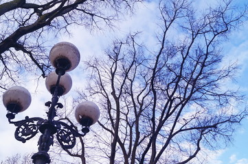 Street lamps and trees in winter in D'azeglio square in Florence, Italy Fotomurales